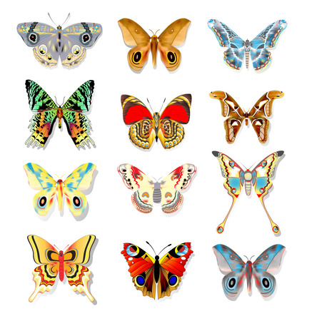 admiral: illustration set of colorful butterflies on a white background Illustration