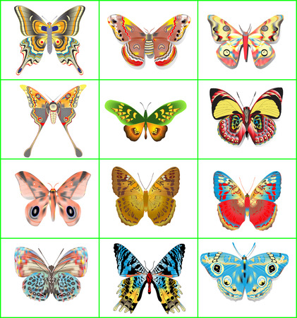Illustration set of decorative butterflies on a white background Vector