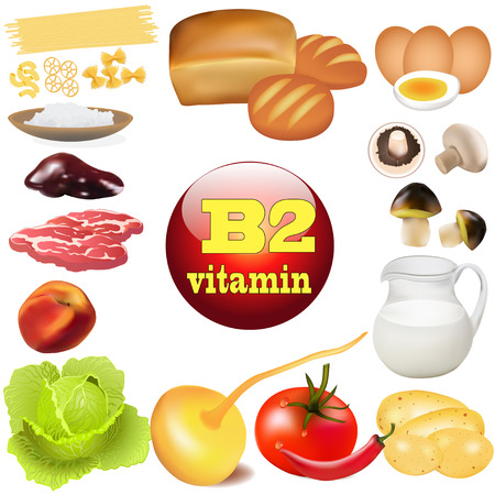 illustration of two vitamin b in plant and animal products The origin of the Vector