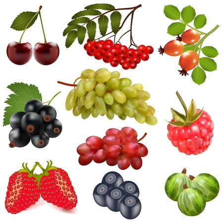 illustration of a set of ripe berries on a white background Vector
