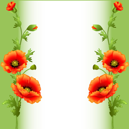 illustration background with bright flowers poppy for advertising Vector
