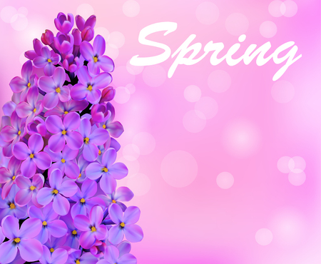 fragrant bouquet: illustration spring background with beautiful blooming lilac