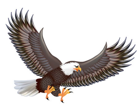 talons: Illustration of the mighty predator eagle in flight isolated on a white background Illustration