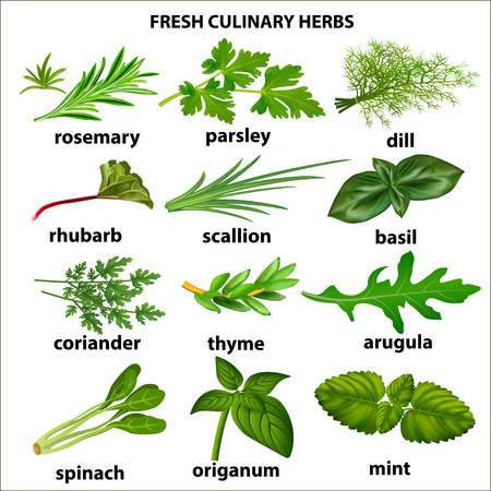 Illustration of a set of culinary herbs for a restaurant
