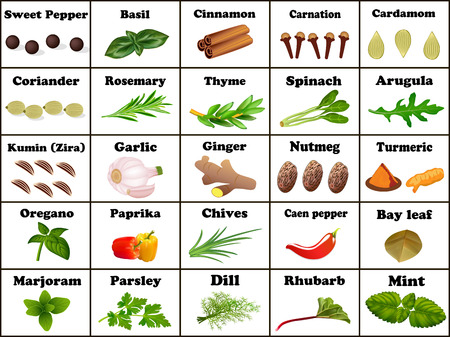 Illustration set of spices and herbs for cooking Illustration