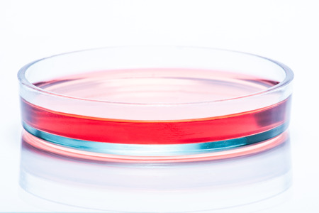 Glass Petri dish with red liquid photo