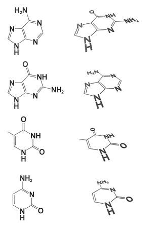 nucleotides: estructura cristalina
