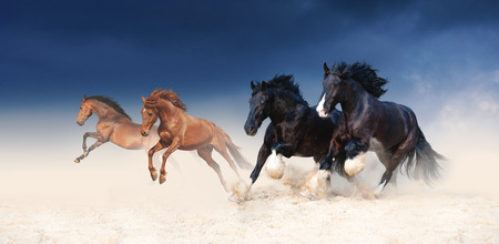 A herd of black and red horses galloping in the sand against the background of a stormy sky. Four stallions in the desert Stock Photo