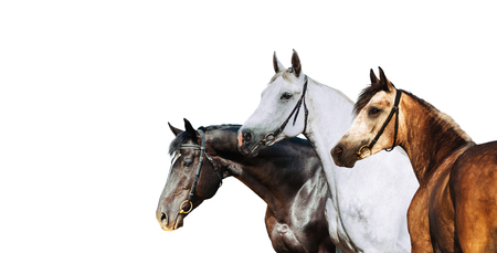 Portrait of three different horse suits isolated on white background Stock Photo