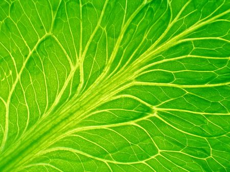 leaf of salad close-up Stock Photo