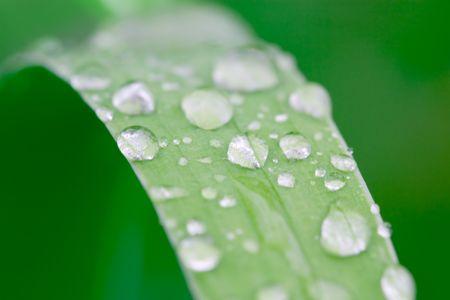 wässern Sie Tröpfchen auf einem Grasblatt, flachen dof