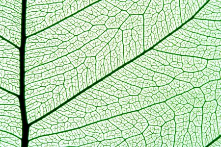 grean leaf texture, ornate organic background Stock Photo - 897482