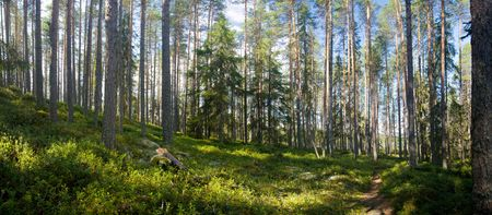 panoramic: panoramic view of summer forest at Ruunaa hiking area, Finland Stock Photo