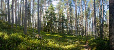 Ruunaa 하이킹 지역, 핀란드에서 여름 숲의 파노라마보기