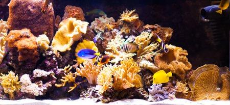 anubias: autiful acuario tropical de agua dulce plantado con peces Foto de archivo
