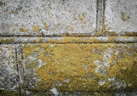 close up.yellow lichen on the wall of the old building . photo with copy space