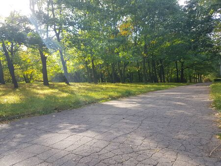 old empty road through the woods in the morning. photo with copy space