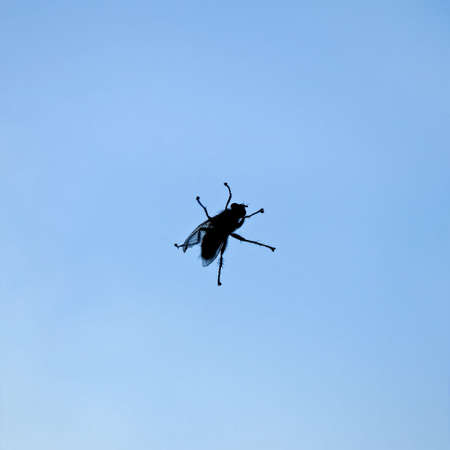 Silhouette of the fly sitting on a window pane