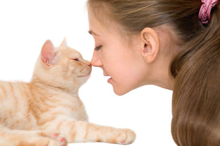 The girl with a red kitten of breed Scottish-straight are photographed on the white background Stock Photo