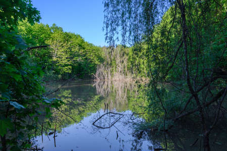 View of the forest lake through thickets