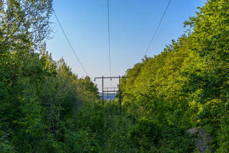 The power line in the forest