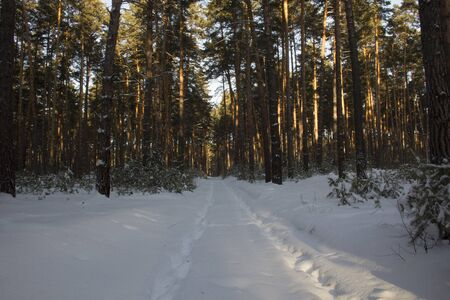A forest road covered with snow leads along a clearing through a winter forest