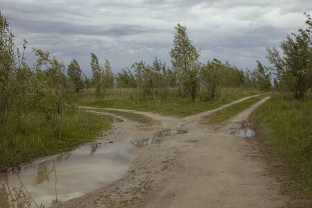 A dirt road bifurcates. Puddles after rain, rut among grass and bushes. SUV Route
