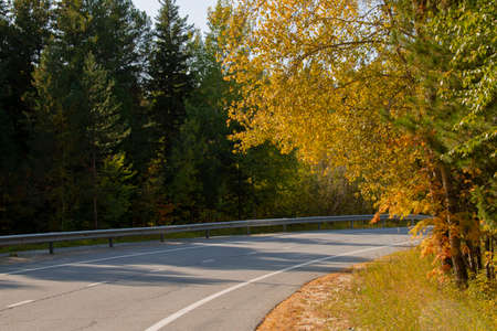 A two-lane highway winds through an autumn forest, green and yellow leaves, pine cones and fallen needles on the side of the road