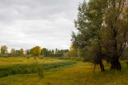 September in Siberia - yellow foliage, endless fields and meadows under a cloudy sky