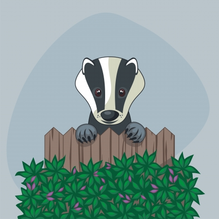 Lindo tejón de pie a lo largo de la cerca de madera de alguien