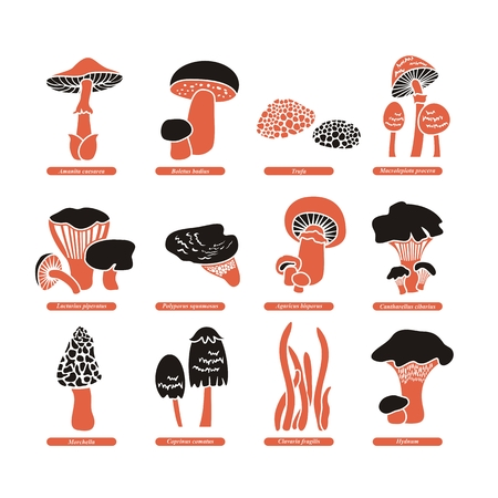 Set with various edible fungi and their Latin names Ilustração