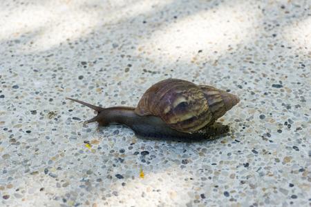 cochlea: Snail