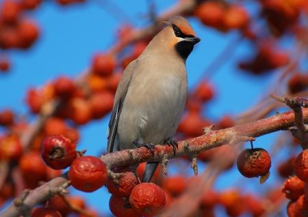 Uccello su un ramo in un frutteto