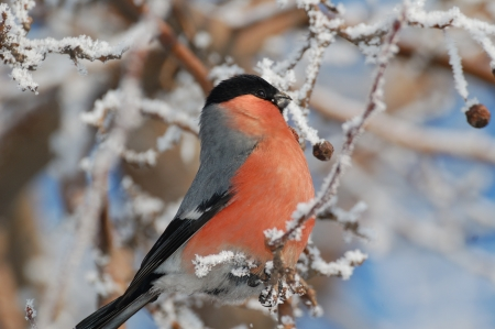 telephoto: The picture was taken the winter frosty morning. Stock Photo