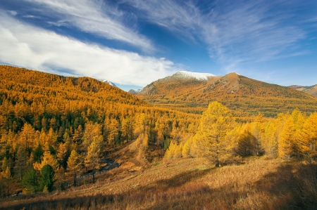 gold capped: Forests and mountains, West Siberia, Altai mountains, Katun ridge. Stock Photo