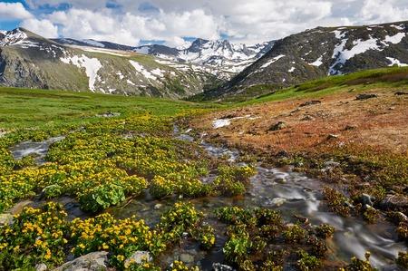 katun: Beautiful summer landscape,Mountain creek, Russia, Siberia, Altai mountains, Katun ridge. Stock Photo