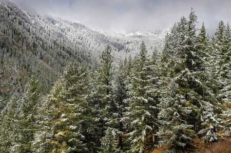 Mountain lake Russia West Siberia Altai mountains. Beautiful landscape snow-covered winter forest in the mountains covered in fog. Standard-Bild
