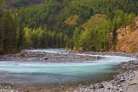 Mountain lake Russia West Siberia Altai mountains. Beautiful landscape sunny morning, the mountain river Kucherla surrounded by autumn pristine taiga forest.