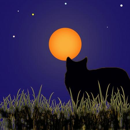 wolf Stock Vector - 16868585