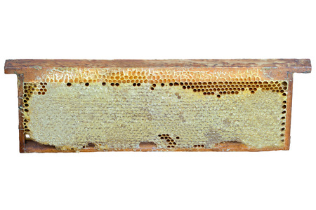 apiculture: honey  honeycomb  food  sweet  gold  wax  cell  pattern  propolis  apiculture pollen Stock Photo
