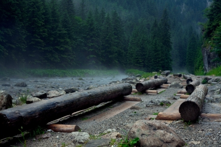 logs are a mountain river photo