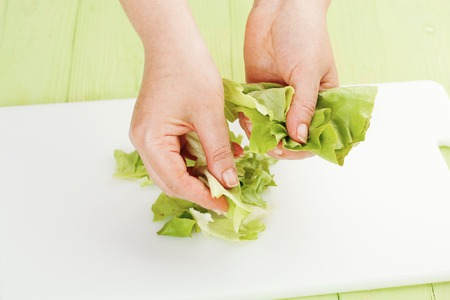 rips: Chef rips green leaf lettuce on a cutting board closeup