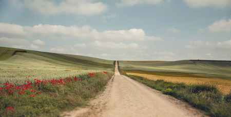 camino: Picturesque landscape with wheat fields and red poppies. The pilgrimage route Camino de Santiago