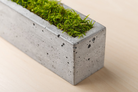 planters: Stylish concrete planters with green moss on the table in the office