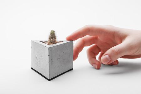 Menselijke hand raakt betonnen pot met cactus op een witte achtergrond
