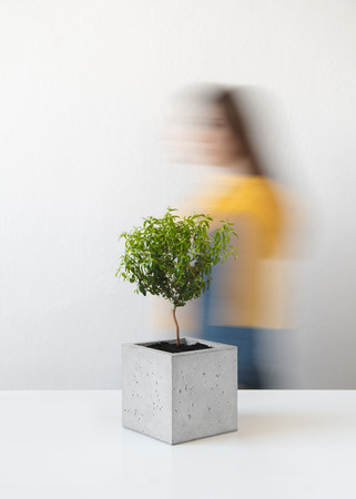Houseplant in a stylish pot of concrete stands on a table in the room