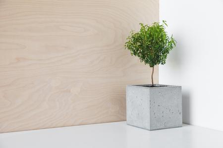 Kleine een boom in een pot beton op een bureau in het kantoor