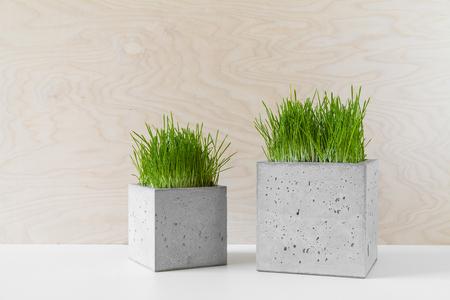 Modieuze betonnen potten met groen gras op een tafel binnenshuis