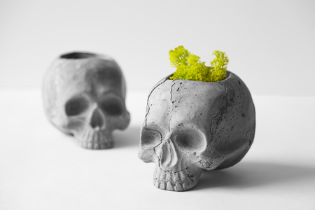 Brutal pot for indoor plants in the form of skull from cement. Stylish planters for the office out of concrete