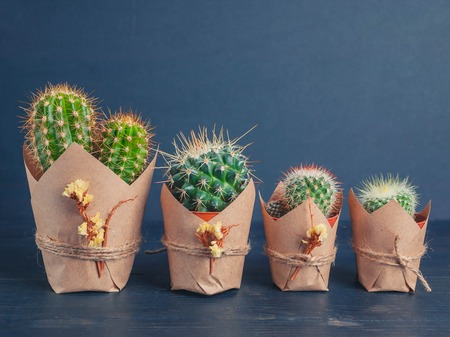 cactus family on a blue wooden background. Light toning